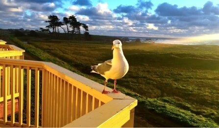 seagull on balcony